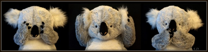 Koala_SeeHearSpeakNoEvil